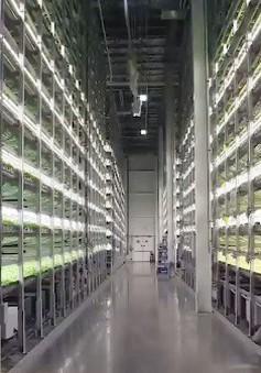 Trang trại thẳng đứng - Giải pháp thực phẩm cho tương lai