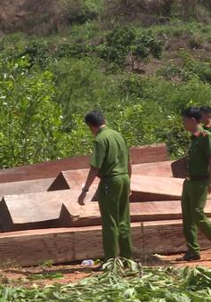 Phát hiện một vụ khai thác gỗ trái phép quy mô lớn