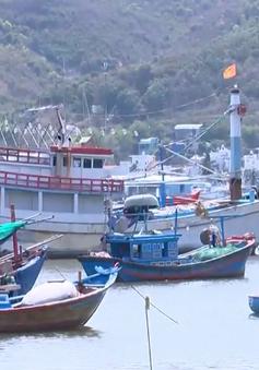 Vay vốn đóng tàu cá theo Nghị định 67: Tiếp tục tăng nợ xấu