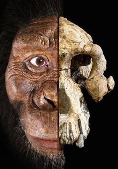 Khuôn mặt tổ tiên lâu đời nhất của con người lần đầu được tiết lộ