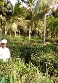 Sri Lanka: Làm thương hiệu để gia tăng giá trị chè