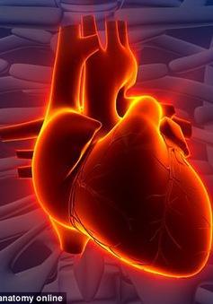 Sử dụng máy in 3D tạo ra các bộ phận chức năng của tim không có collagen