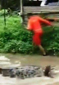 Cá sấu bơi ra đường sau trận lụt ở Ấn Độ