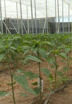 Nông dân Tây Ban Nha dùng côn trùng thay thế thuốc trừ sâu