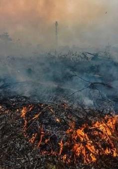 Cháy rừng Indonesia gây lo ngại gia tăng nhiệt độ toàn cầu