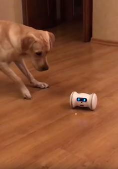 Robot bầu bạn với thú cưng