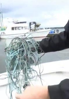 Phần Lan: Thu gom lưới đánh cá bị bỏ trên biển