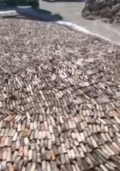 Ván trượt tái chế từ 12.000 mẫu thuốc lá