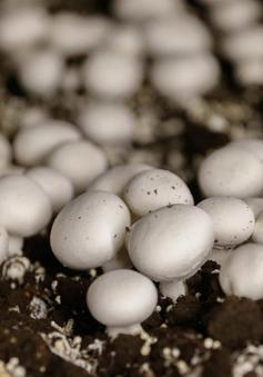 Cục An toàn thực phẩm khuyến cáo việc sử dụng các loại nấm