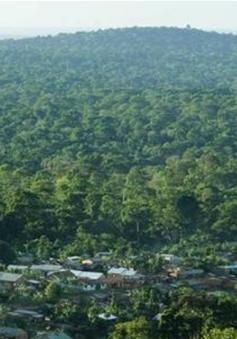 Gabon được trả tiền để bảo vệ rừng