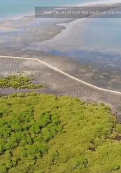 Quảng Nam khôi phục rừng ngập mặn ven biển