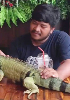 Quán cà phê bò sát tại Campuchia
