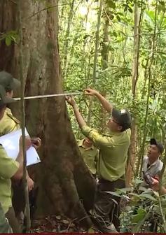 Quảng Nam: Để rừng Sông Thanh trở thành vườn Quốc gia