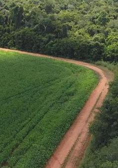Các hãng hàng tiêu dùng lớn không đạt mục tiêu chống phá rừng
