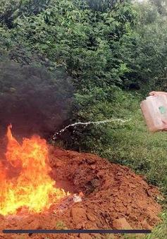 Quảng Ninh: Thu giữ và tiêu hủy 800kg lòng lợn có dấu hiệu hư hỏng
