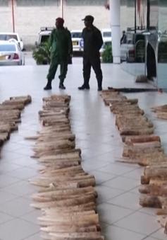Tanzania bắt giữ đối tượng buôn bán lượng lớn ngà voi