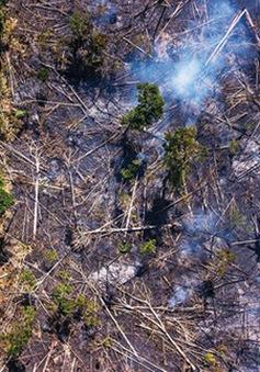 Các nước có rừng Amazon ký thỏa thuận phối hợp bảo vệ rừng