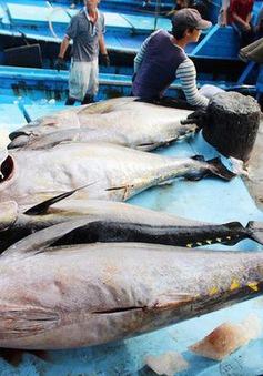 Hy Lạp tăng nhập khẩu cá ngừ Việt Nam