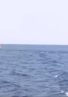 Hải quân Vùng 3 bám biển đón xuân