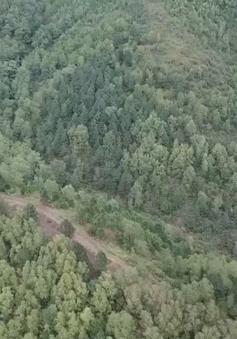 Tăng cường bảo vệ khu vực trọng điểm cháy rừng dịp Tết Nguyên đán