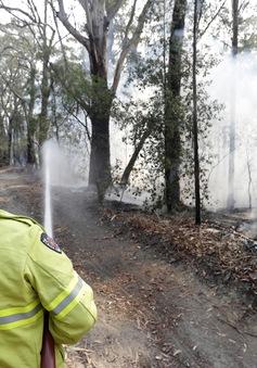 Khói mù do cháy rừng ở Australia lan sang New Zealand