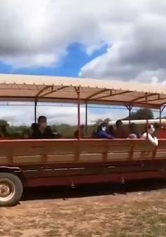 Người dân Mỹ thích thú đi hái táo tại các nông trại