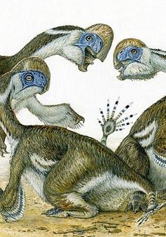 """Phát hiện hóa thạch khủng long """"lai vẹt"""" kỳ lạ"""