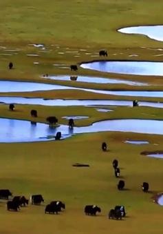 Nhiều biện pháp bảo vệ môi trường sinh thái cho người dân Trung Quốc