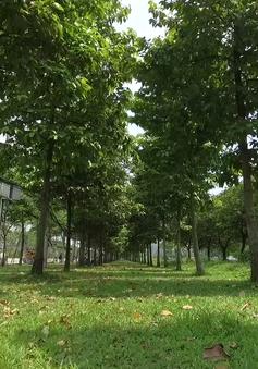"""1 triệu cây xanh cho Việt Nam - """"Tấm khiên chắn"""" bảo vệ môi trường"""