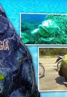 Việt Nam nỗ lực bảo vệ rùa biển