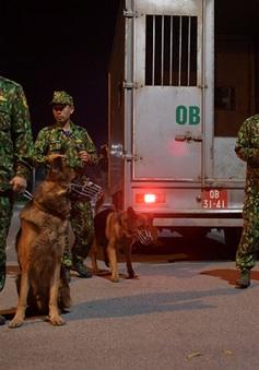 """Xem những chú chó nghiệp vụ có nhiệm vụ đặc biệt """"trổ tài"""""""