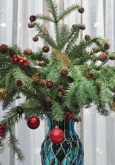 Chưa tới Noel, người dân Hà Nội đã săn lùng thông tươi về cắm