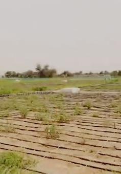 Nông nghiệp thông minh ở vùng sa mạc