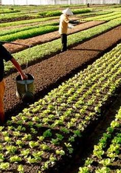 Các tỉnh miền Trung cần gần 9.500 tỷ đồng để khôi phục sản xuất nông nghiệp