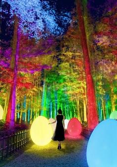 Lạc lối trong ánh sáng huyền ảo tại vườn cổ đẹp bậc nhất Nhật Bản