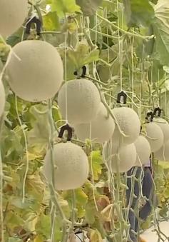 Gia Lai chú trọng phát triển nông nghiệp bền vững