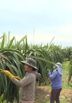 Hỗ trợ nông dân nghèo bị ảnh hưởng bởi dịch COVID-19