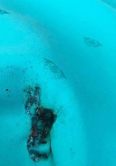 Tiếp viên Vietnam Airlines bị dí thuốc lá cháy dở, bị xa lánh sau vi phạm cách ly của BN1342
