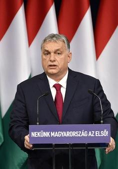Hungary: Trồng 10 cây xanh khi 1 trẻ chào đời