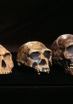 """Phát hiện gen """"bí ẩn"""" trong ADN người Tây Phi"""