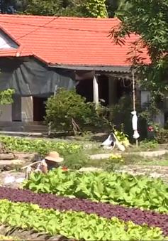 Thừa Thiên Huế: Chuyển đổi cây trồng vùng ven biển