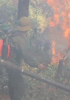 Khống chế vụ cháy rừng thông trên núi Đại Bình, Lâm Đồng