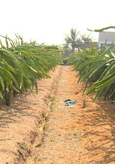 Nhà vườn miền Tây tránh mặn cho vườn cây ăn trái