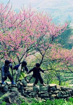 Hoa đào núi Tây Bắc khoe sắc hồng tuyệt đẹp trong nắng xuân