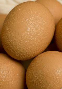 Ăn trứng giúp chặn đứng nguy cơ mắc bệnh tim