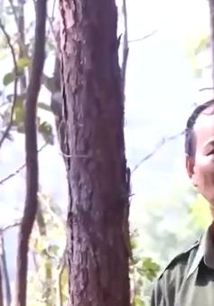 Chủ động phòng chống cháy rừng trong mùa khô