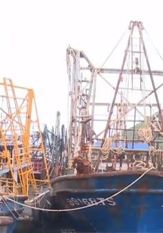 Thêm 5 tàu cá đóng theo Nghị định 67 mua được bảo hiểm