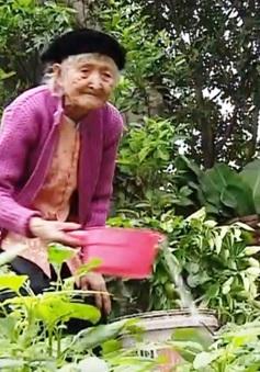 Cụ bà 107 tuổi yêu lao động