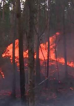 Cảnh báo cháy rừng cấp cực kỳ nguy hiểm ở Tây Nguyên, Nam Bộ