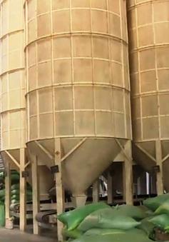 Doanh nghiệp hủy thầu gạo với Nhà nước phải chịu phạt thế nào?